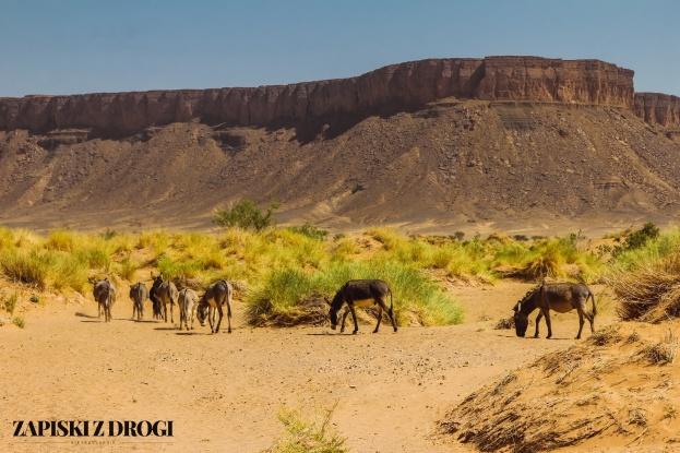 Maroko-pustynia 02