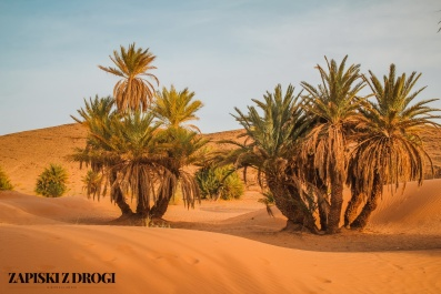 Maroko-pustynia 22