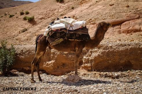 Maroko 0548