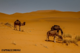 Maroko 0964