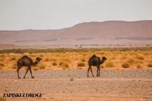 Maroko 1102
