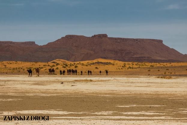 Maroko 1151a