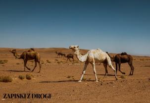 Maroko 1207