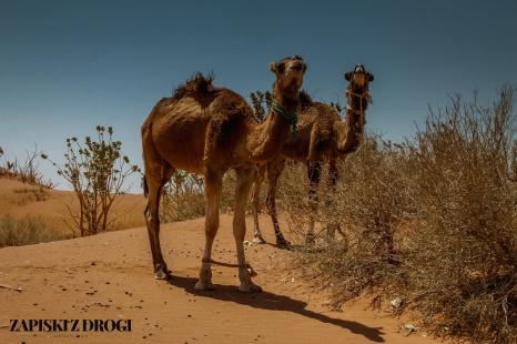 Maroko 1245