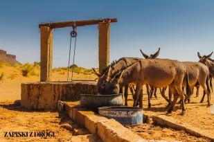 Maroko 1261