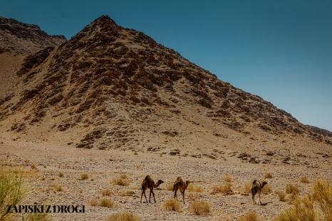 Maroko 1319