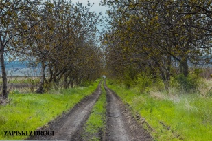 064 Mołdawia