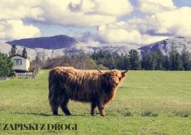 0282 South West Scotland