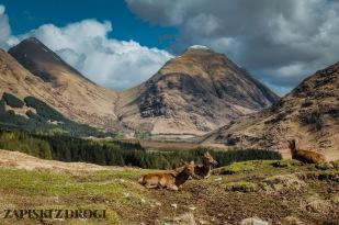 0353 South West Scotland