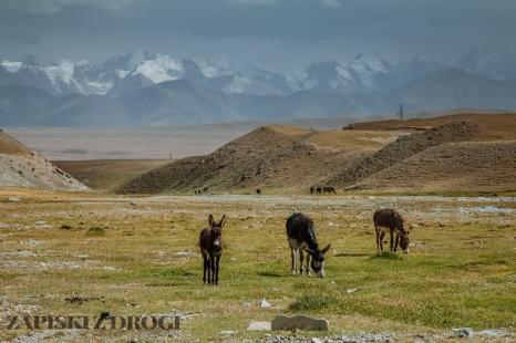 1_0291 Kirgistan - Kara-Say