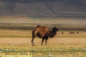 1_0605 Kirgistan - Tien Shan