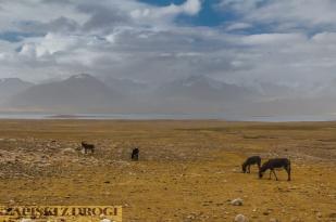 0511 Tadzykistan - Zorkul
